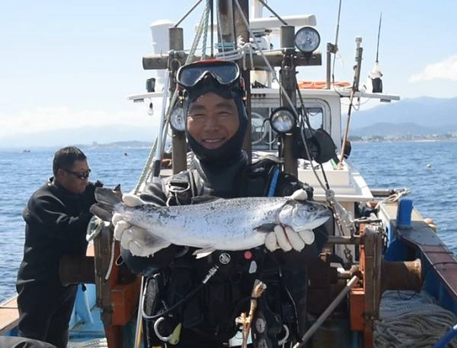 Donghae STF Co., a local aquaculture firm, has been raising some 10,000 silver salmon at a special enclosure some 5 kilometers off the country's eastern coast since late last year. (image: Min. of Oceans & Fisheries)