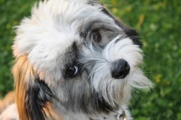 Everyone Needs Insurance – Even Pets