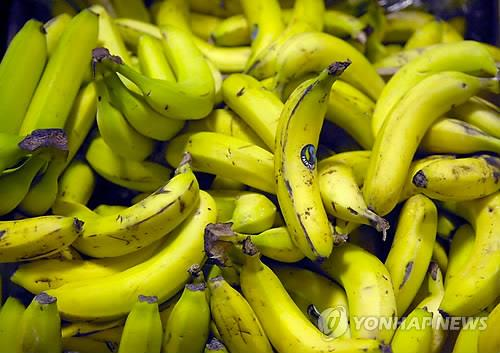 The accumulated quantity of imports of bananas as of September was 272,000 tons, which was a 1.6 percent decrease compared to the same period last year (277,000 tons). (Image : Yonhap)
