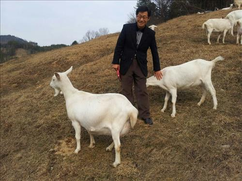 Goats Might be Coming to Seoul's Noeul Park
