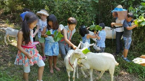 Currently, different areas in Europe and Japan offer education and therapy programs using goats. In Hokkaido, Japan, programs that allow elementary school students to interact and care for goats are being offered. (Image : Yonhap)