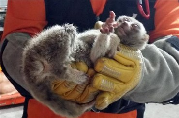 Endangered Monkeys Found at Busan Market