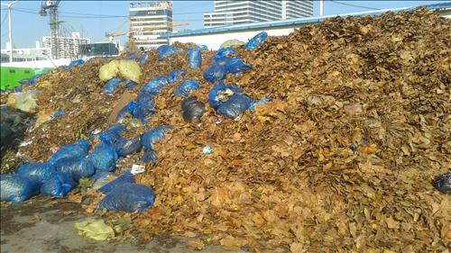 The Sudokwon Landfill Site Management Corporation has temporarily allowed the disposal of fallen leaves gathered in the metropolitan area until the end of February 2016. (Image : Yonhap)