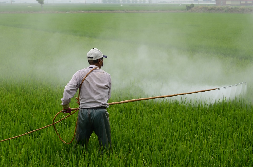 A research team lead by professor Lee Won-jin at the Korea University's Preventive Medicine Department has announced that since a ban was implemented on the production and sales of Paraquat, a herbicide often used to commit suicide, the number of suicides committed by drinking poisonous herbicides decreased by 56 percent. (Image : wuzefe / Pixabay)