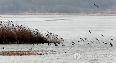 Feast for Winter Birds in Gochang