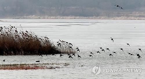 Feast for Winter Birds in Gochang
