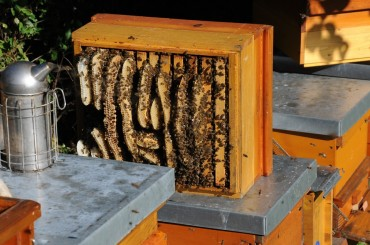Beekeeping Taking Off in Metropolitan Areas