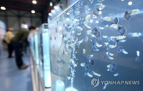 Aquarium fish, also known as 'aqua pets', are in the limelight as a promising growth industry. (Image : Yonhap)