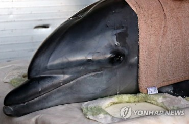 Rescued Dolphin Expresses Gratitude after Return to Sea