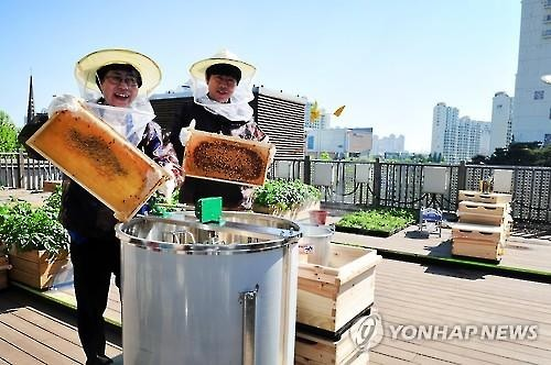 A year after they settled down on a rooftop in the urban Bupyeong-gu (district), 220,000 bees survived the cold winter. It was a meaningful result of the 'Urban Bees Seoul' project, which was launched in 2013 by the Seoul Beekeeping Cooperative. (Image : Yonhap)