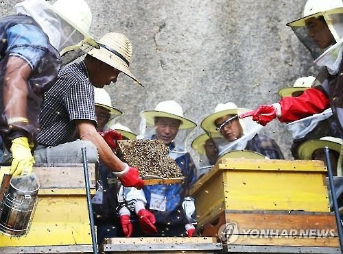 A group of senior citizens learns about beekeeping at an urban beekeeping school in Seoul in this file photo taken on June 16, 2015. (Image : Yonhap)