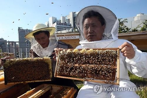 Min Dong-seok (R), secretary-general of the Korean National Commission for UNESCO, and Park Jin, head of the Urban Bees Seoul, show hives during a ceremony to harvest honey on the rooftop of the commission's building in downtown Seoul in this file photo taken on Sept. 15, 2015. (Image : Yonhap)