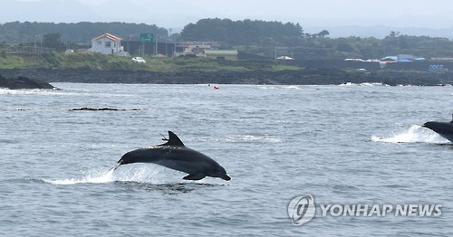 Dolphins Returned to Sea Spotted Happy and Healthy