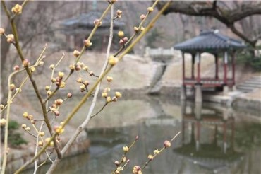 Changdeok Palace Flowers Announce Start of Spring