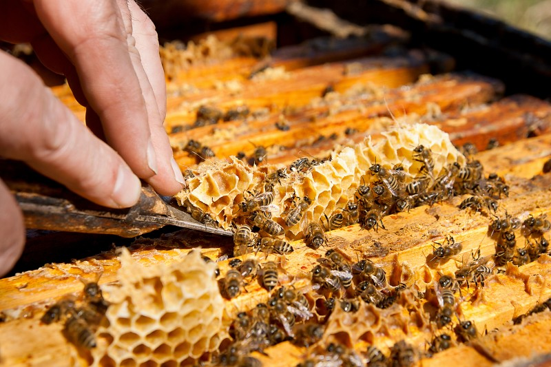 Urban Areas Offer Promising New Locations for Beekeeping
