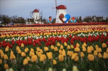 Tulip Festival Brings Spring to Sinan