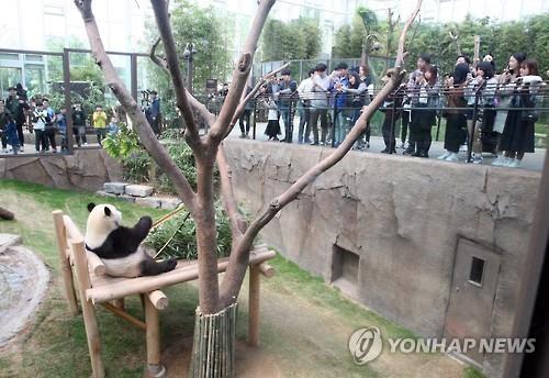 Chinese Panda Bears Make S. Korean Debut