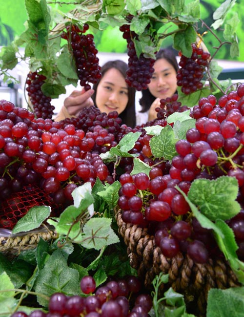 The locally produced Delaware grapes are to be available for the first time in Korea. (image: Yonhap)