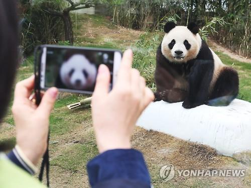 Pandas from China Unveiled to the Public in Korea