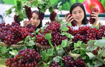 Carrot, Grape and Blueberry Farmers Eligible for Subsidies after FTA Losses