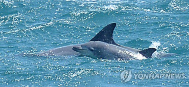 In Unprecedented Event, Released Dolphin Confirmed to Have Given Birth in Wild Sea