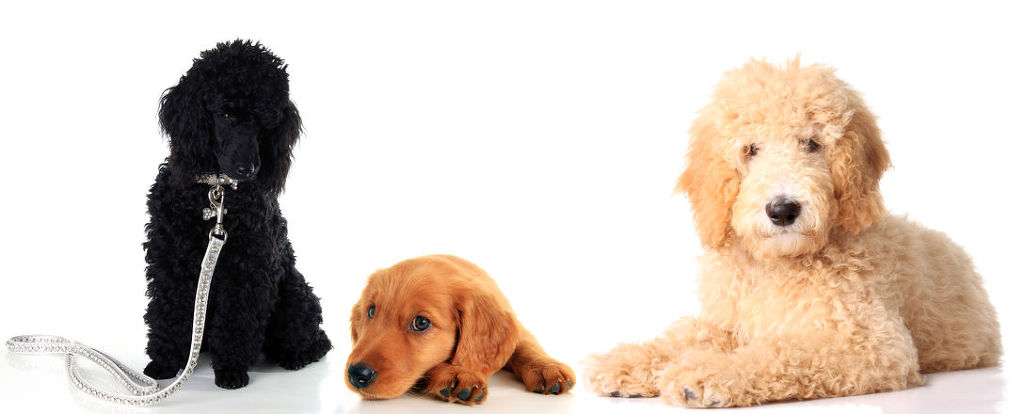 The domestic pet industry is expected to be valued at six trillion won by 2020.