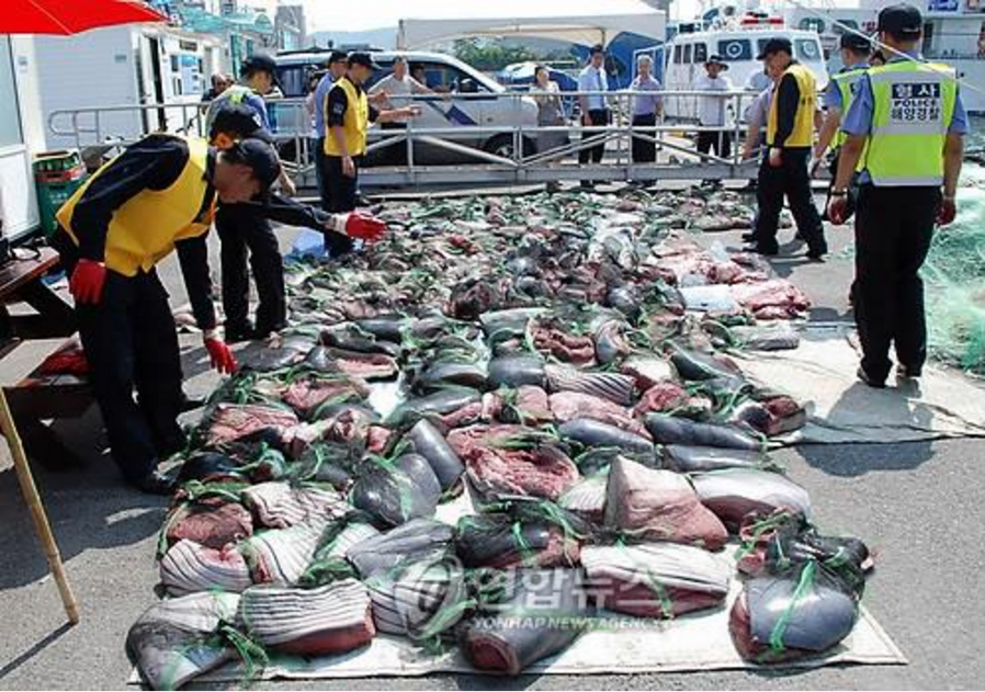With the high price and demand for whale meat despite whaling bans, law enforcement agencies have been apprehending more and more poachers, either in action or by tracking them from markets. (Image Courtesy of Yonhap)