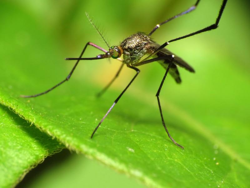 Korea Develops 20-minute Zika Test Kit