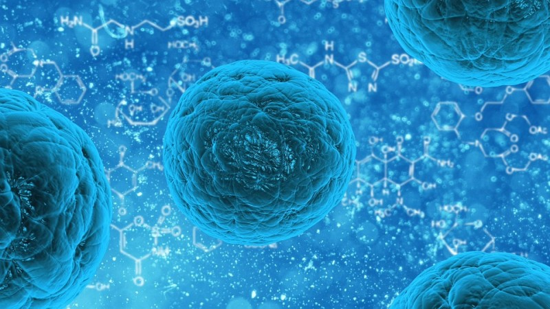Korean Stem Cell Research to Resume
