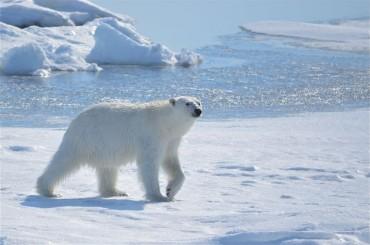 S. Korea Turns to Arctic for New Biz Opportunities