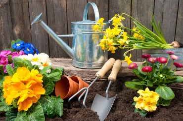 Cancer Patients Fight Depression with Gardening