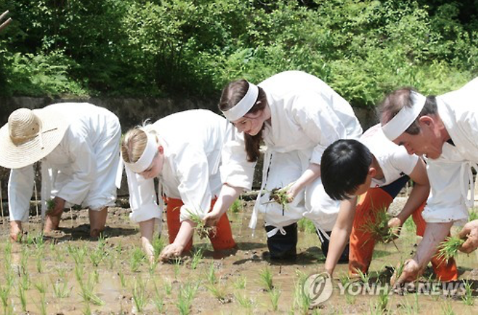 Royal Palace Hosts Rice-Planting Ceremony