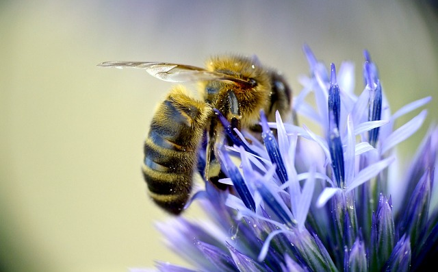 Myths about cell phones killing bees to the point of extinction have also turned out to be false. (image: Pixabay)