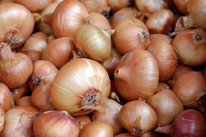 Onions Effective for Male Infertility Treatment and Improved Blood Circulation