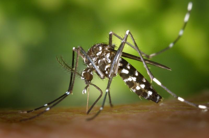 Amid Zika Scare, S. Korea Sends Largest Medical Team