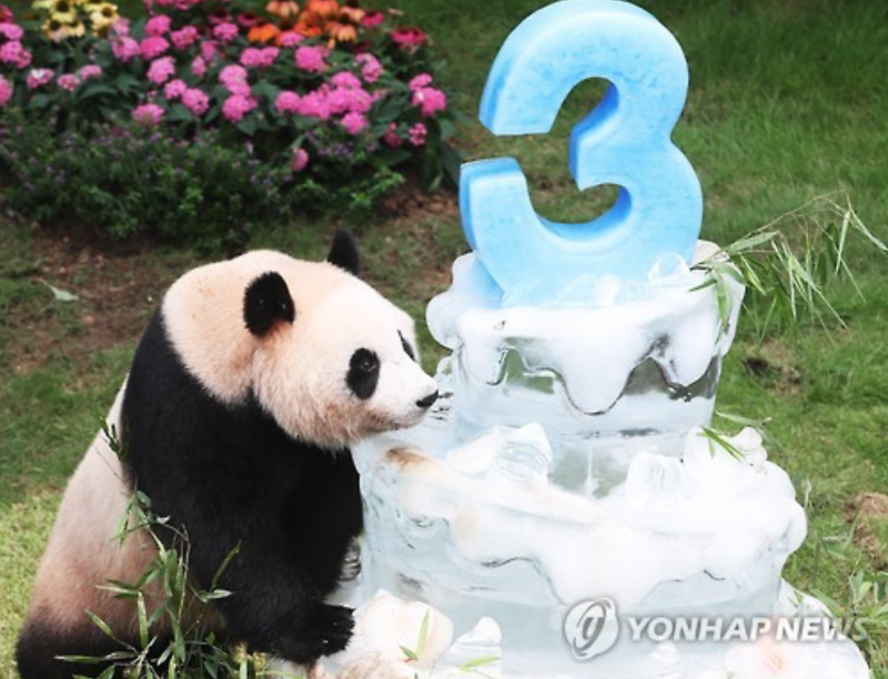 Happy Birthday Pandas!