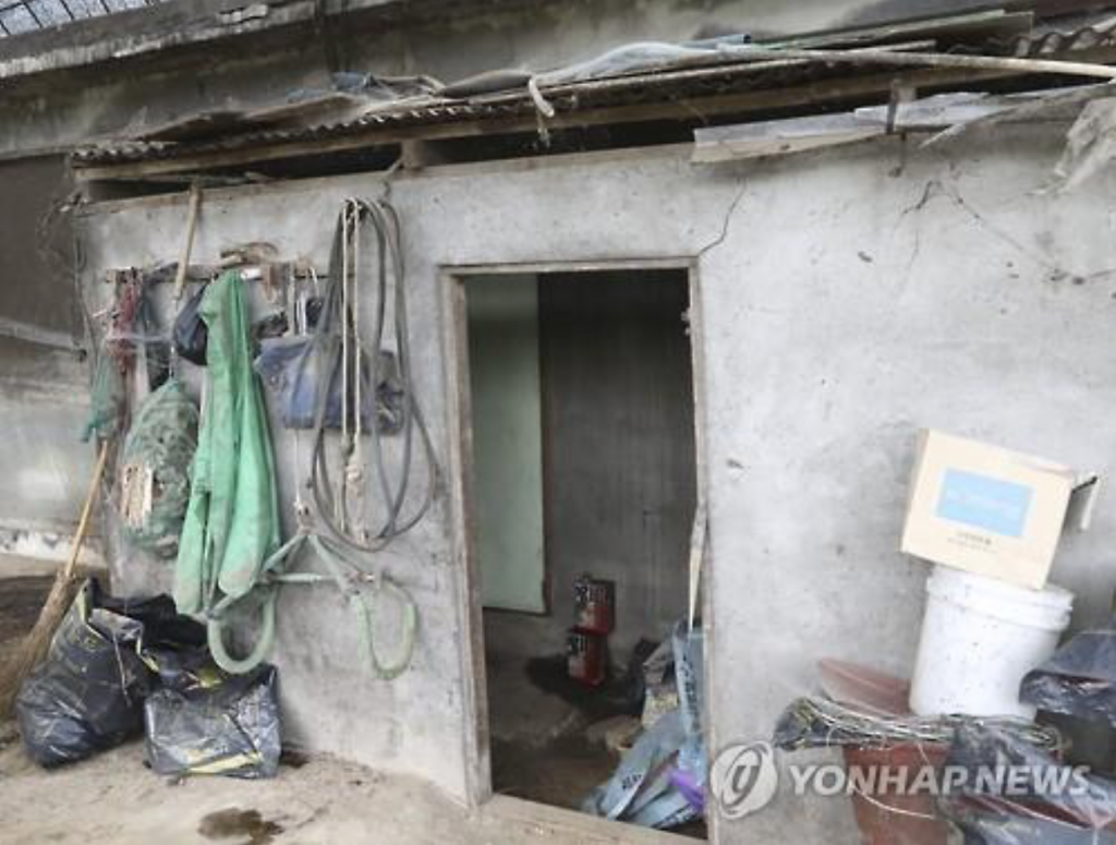 The appalling room located less than three meters from the barn was impregnated with the odor of cattle dung. (image: Yonhap)