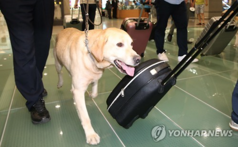 Sniffer Dogs Seek New Owners after Retirement