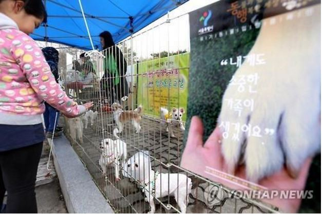 Instead of providing healthy animals to the market, the government should encourage pet adoption, or perhaps even provide financial assistance, as it will for newly opening pet breeding facilities, to animal shelters and animal rescue organizations. (image: Yonhap)