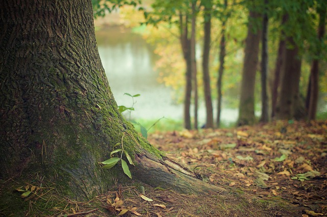 The 'Online Tree Sharing' website (env.seoul.go.kr/tree-sharing) supports tree sharing among citizens who own trees at an individual house or a multiplex building but can no longer provide care for their plants due to construction or development work. (image credit: Pixabay)