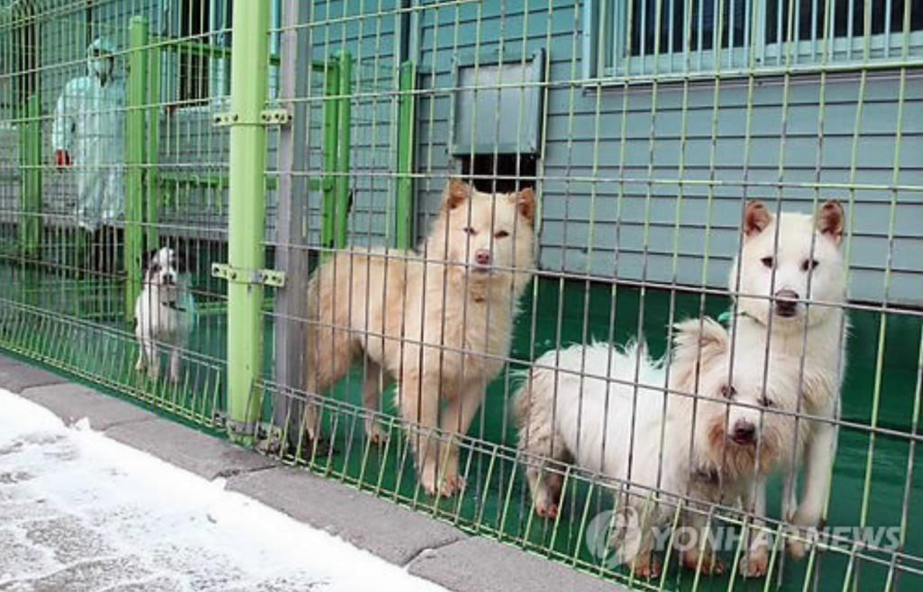 . The Ministry of Agriculture, Food and Rural Affairs estimates that an average of 60,000 dogs are kicked out of their homes every year. (image: Yonhap)