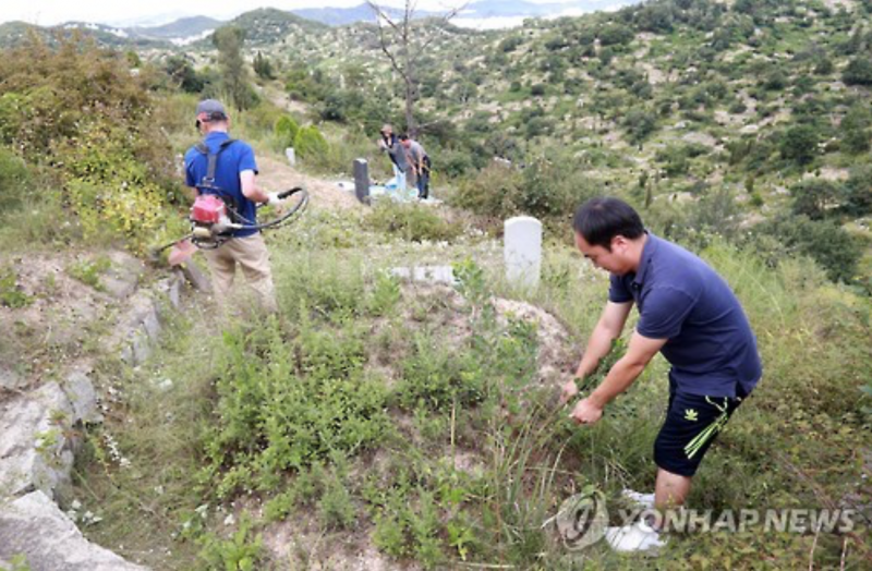 Beolcho – Korea's Traditional Pruning of Ancestral Graves