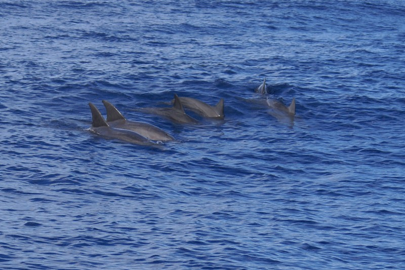 Popularity of Watersports Threatens Korea's Wild Dolphins