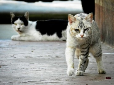 Butcher of 600 Stray Cats Sentenced to Probation
