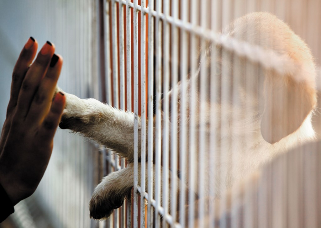 The KSAF speculated that these suppliers were not breeding the dogs themselves, but were instead obtaining them from auction houses or puppy mills, and delivering them to E-Mart shops. (image: KobizMedia/ Korea Bizwire)