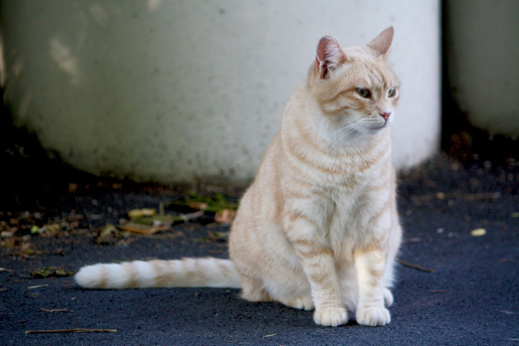 As of 2015, there were an estimated 1.89 million domestic cats and 21,300 stray cats, with up to 30,000 being abandoned each year. (image: KobizMedia/ Korea Bizwire)