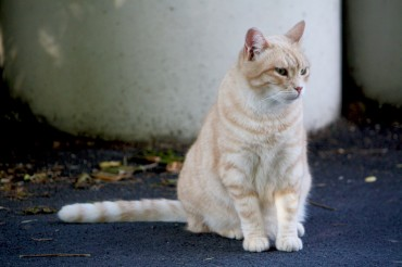 Roadkill Accidents Soar for Seoul's Stray Cats