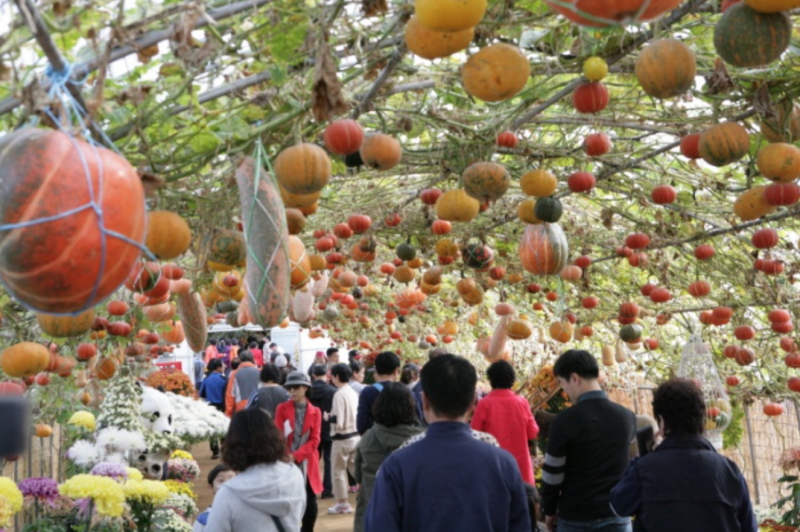 Yeoncheon to Exhibit Korea's Most Bizarre Pumpkins