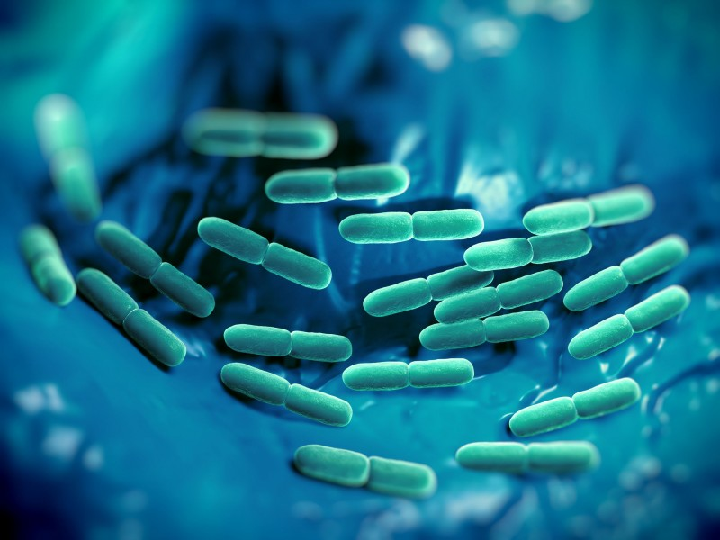 Scientists Find Natural Lactobacillus in Traditional Sauce