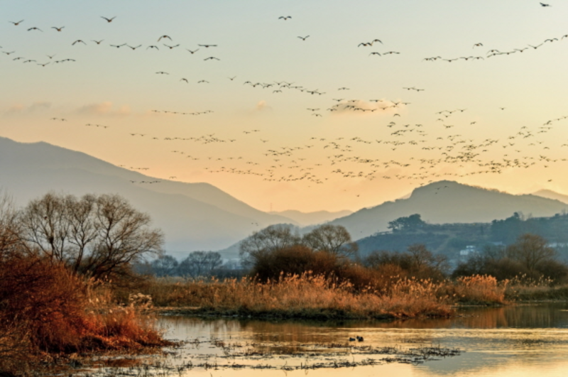 Gimhae Strives to Preserve its Eco-Rich Wetlands